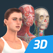 The human body (female) in educational 3D
