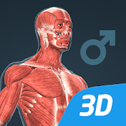 The human body (male) in educational 3D