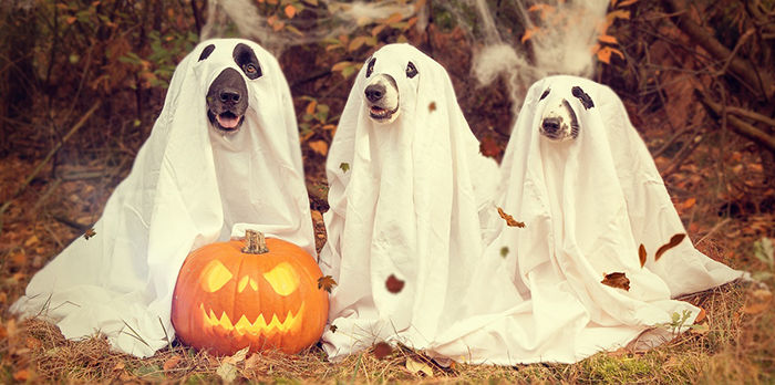"""ghost dogs """"width ="""" 700 """"height ="""" 348"""