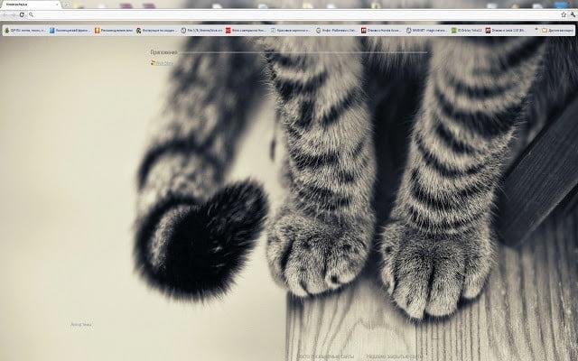 Google Chrome Cat Themes