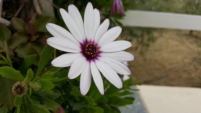 flower galaxy s6 edge